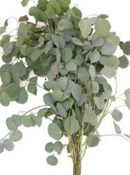 Online Wholesale Bulk Discount Wholesale Silver Dollar Eucalyptus Greenery